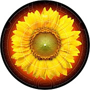 Glowtronics 12 in. Sunflower Glow-in-the-Dark DJ Slipmats