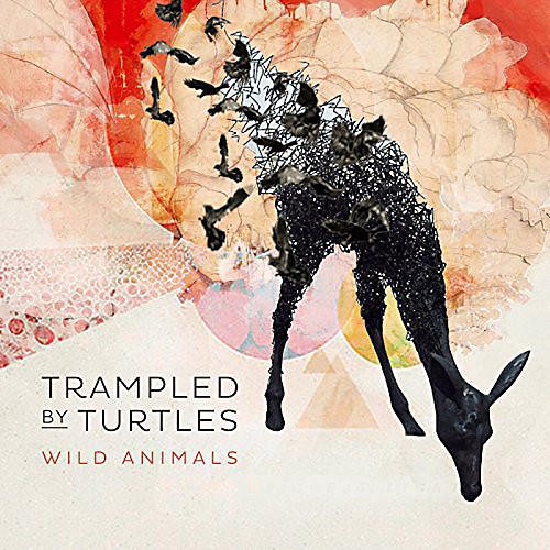 Alliance Trampled by Turtles - Wild Animals thumbnail